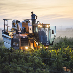 Machine harvesting sauvignon blanc, Mercer Estate Vineyard, Horse Heaven Hills, Washington